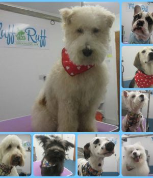Suffolk_Canine_Creche_Fluff_The_Ruff9